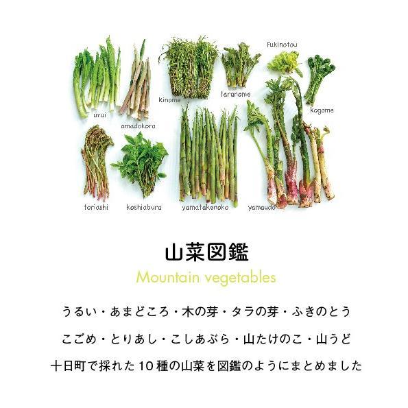 山菜図鑑Tシャツ グレー|kiru-sansai|02