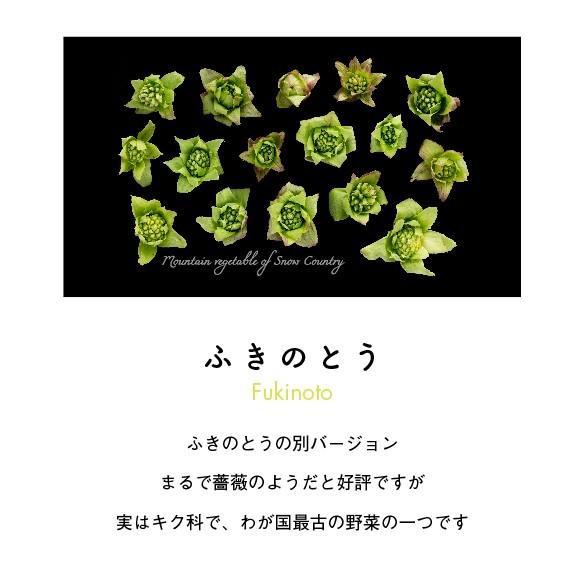 ふきのとうTシャツ カーキ|kiru-sansai|02