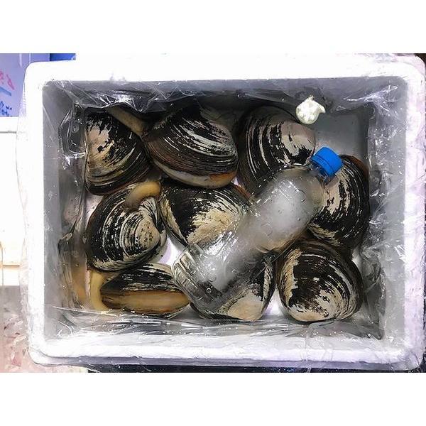 北海道産生ほっき貝(ウバガイ)3kg前後(10個前後)〔B〕北港直販・ホッキ・貝〔代引き不可〕|kitachokuhan
