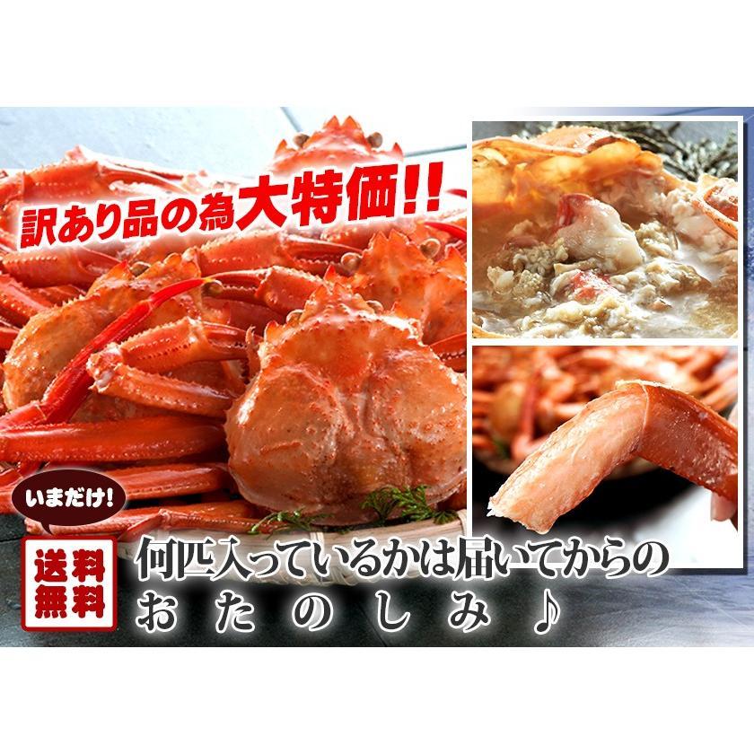 【送料無料】日本海産 訳あり 茹でたて紅ズワイ蟹 2kg【かに カニ 蟹】|kobari-kaniya|03