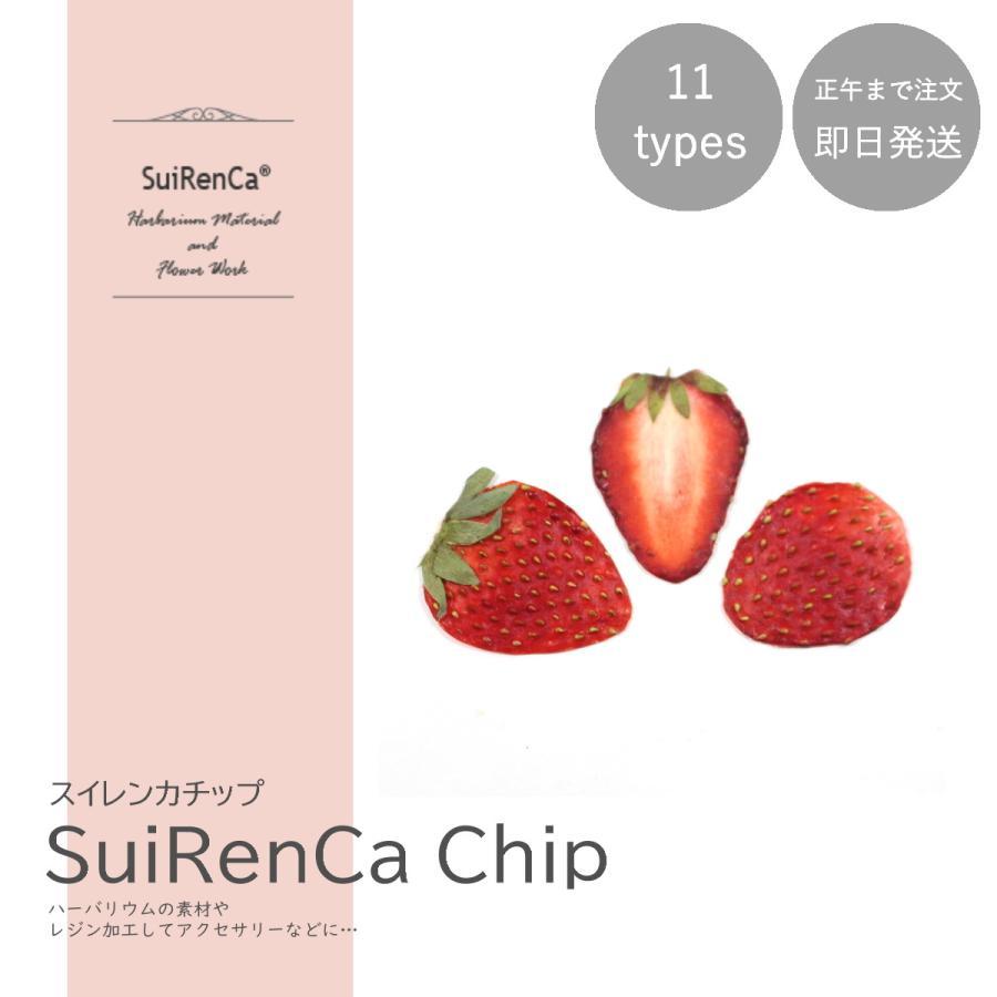フルーツチップ 押し野菜 ドライ パーツ 素材 ストロベリー SRCC-ST スイレンカチップ 驚きの値段 流行のアイテム ハーバリウム