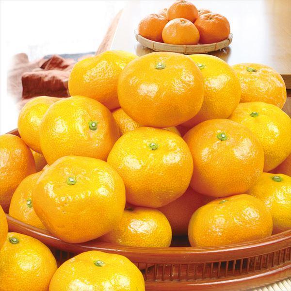 みかん 熊本産 大玉こたつみかん(10kg) 2L〜4L 熊本 ミカン ご家庭用 フルーツ 果物 食品 国華園|kokkaen