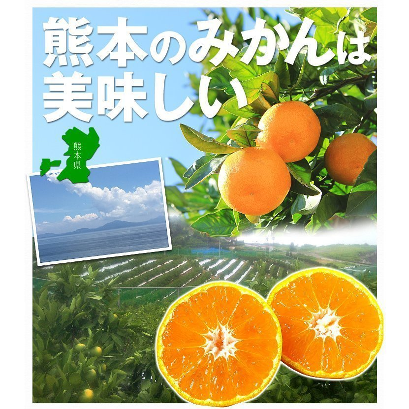 みかん 熊本産 大玉こたつみかん(10kg) 2L〜4L 熊本 ミカン ご家庭用 フルーツ 果物 食品 国華園|kokkaen|07