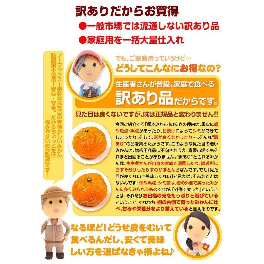 みかん 熊本産 大玉こたつみかん(10kg) 2L〜4L 熊本 ミカン ご家庭用 フルーツ 果物 食品 国華園|kokkaen|08