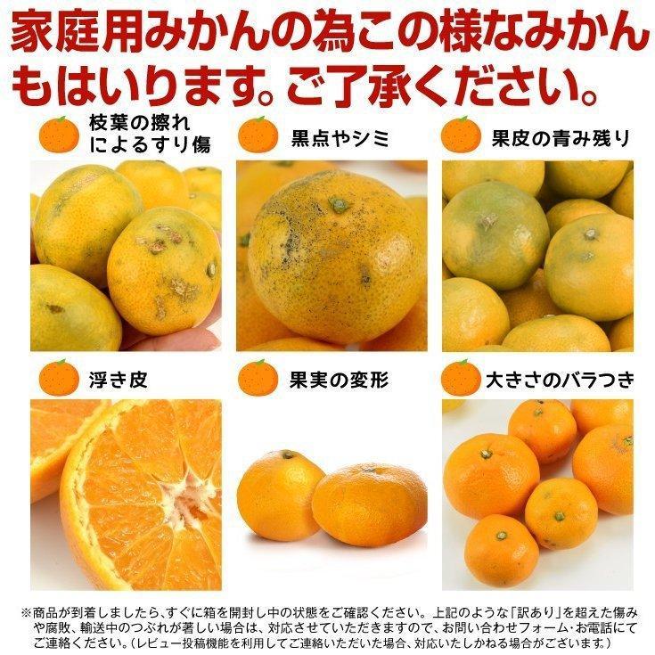 みかん 熊本産 大玉こたつみかん(10kg) 2L〜4L 熊本 ミカン ご家庭用 フルーツ 果物 食品 国華園|kokkaen|09