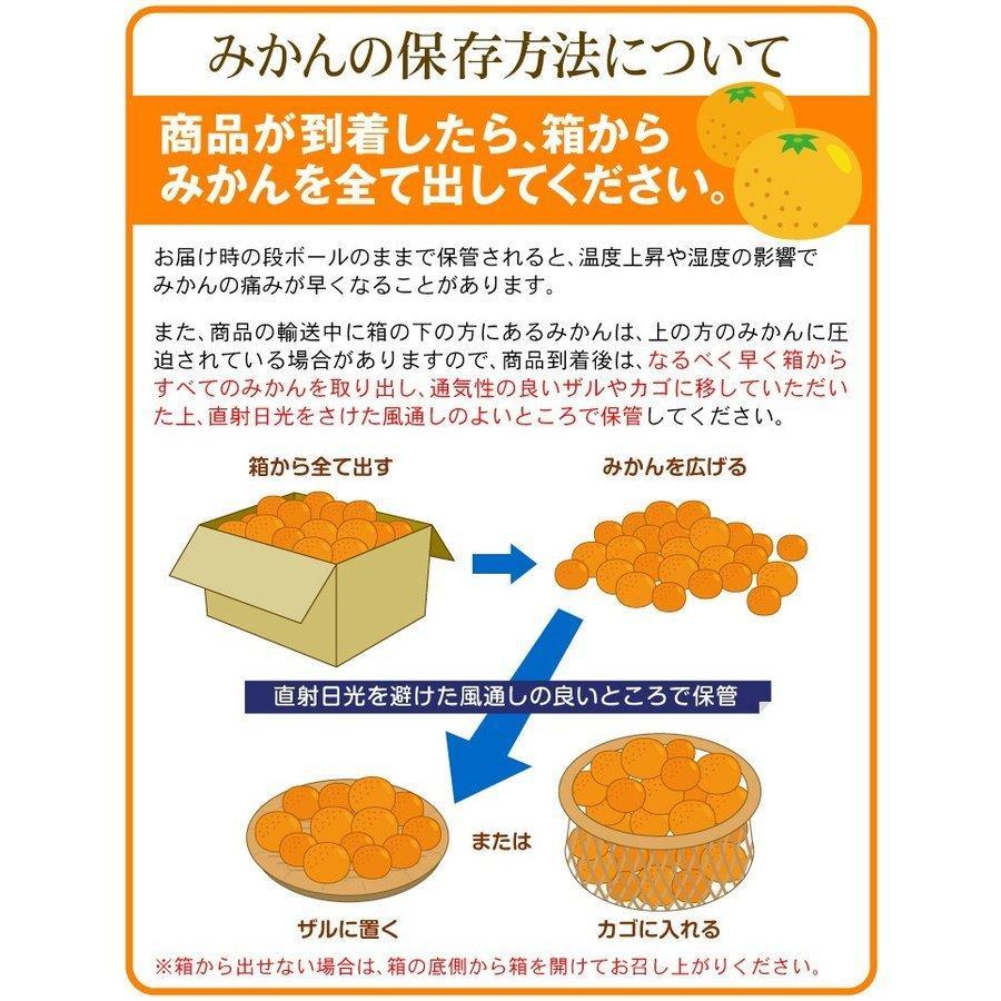 みかん 熊本産 大玉こたつみかん(10kg) 2L〜4L 熊本 ミカン ご家庭用 フルーツ 果物 食品 国華園|kokkaen|10