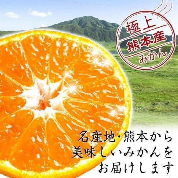 みかん 熊本産 大玉こたつみかん(10kg) 2L〜4L 熊本 ミカン ご家庭用 フルーツ 果物 食品 国華園|kokkaen|04