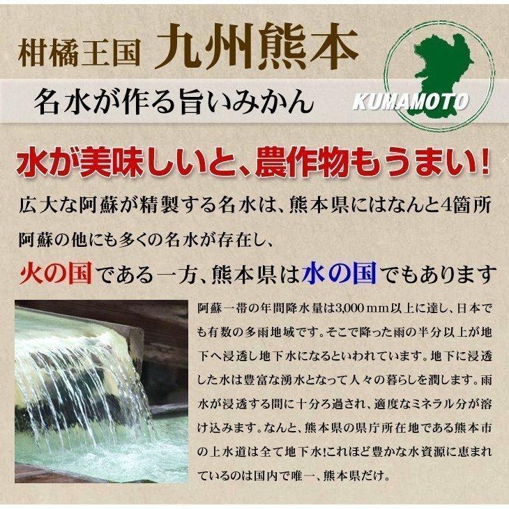 みかん 熊本産 大玉こたつみかん(10kg) 2L〜4L 熊本 ミカン ご家庭用 フルーツ 果物 食品 国華園|kokkaen|05