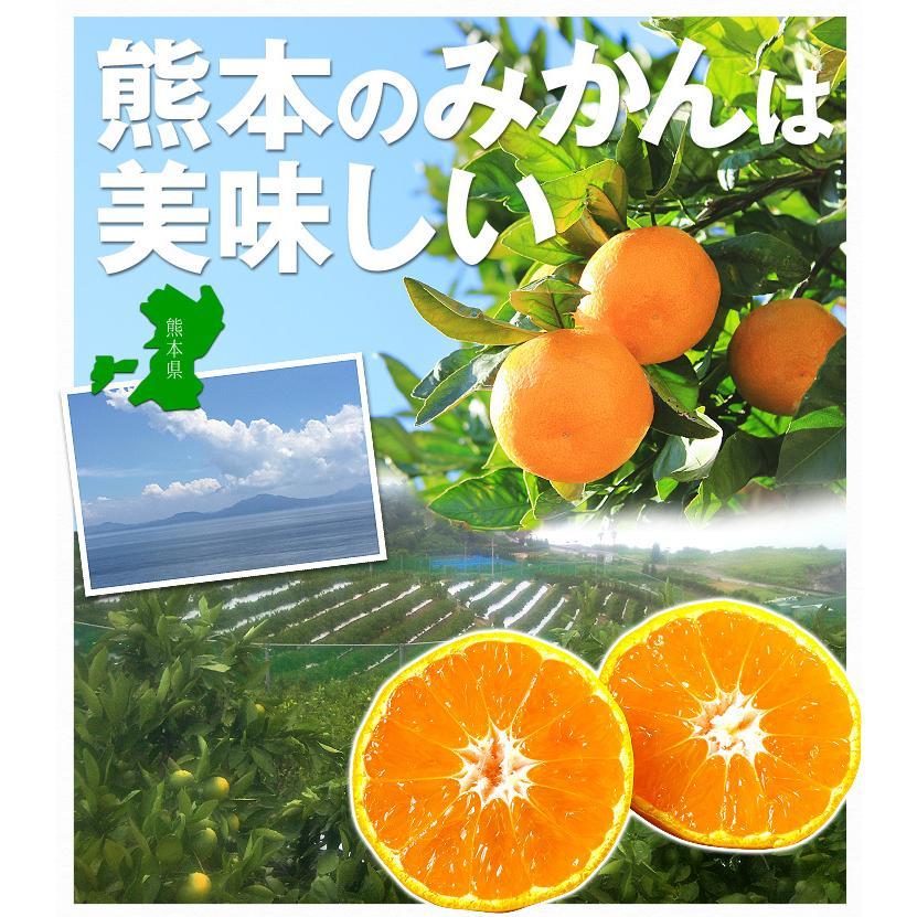 みかん ご家庭用 熊本産みかん(10kg)熊本 蜜柑 柑橘 フルーツ 果物 食品 国華園 kokkaen 06