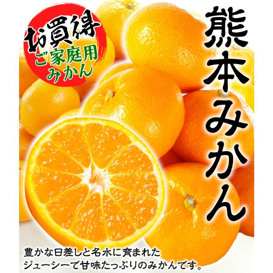 みかん ご家庭用 熊本産みかん(10kg)熊本 蜜柑 柑橘 フルーツ 果物 食品 国華園 kokkaen 02