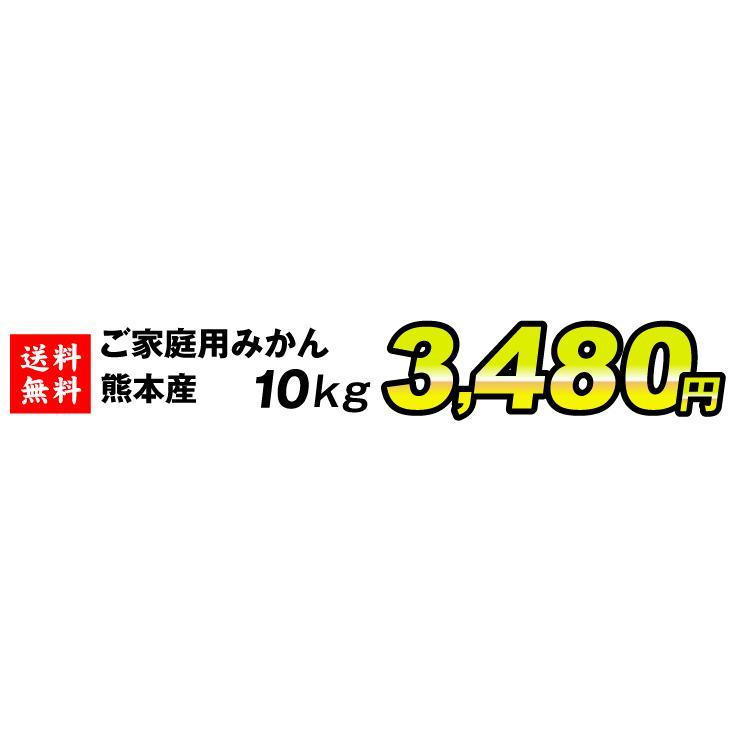 みかん ご家庭用 熊本産みかん(10kg)熊本 蜜柑 柑橘 フルーツ 果物 食品 国華園 kokkaen 03