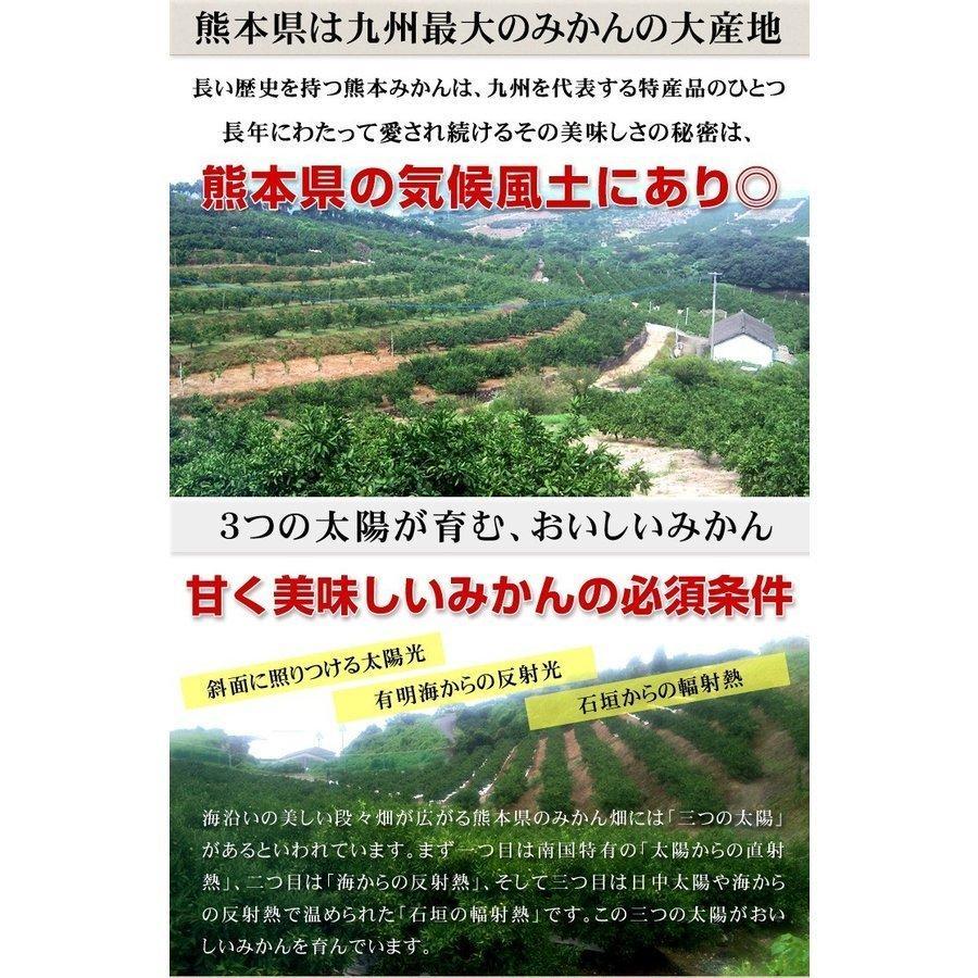 みかん ご家庭用 熊本産みかん(10kg)熊本 蜜柑 柑橘 フルーツ 果物 食品 国華園 kokkaen 05