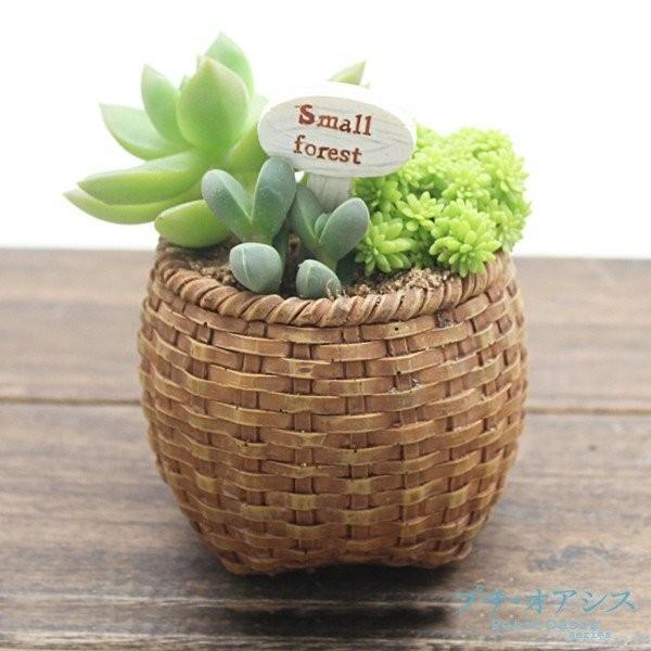 鉢 植木鉢 ポリ製 多肉植物 寄せ植え かわいい プチオアシス・竹かご 1個 女性 プレゼント 国華園|kokkaen