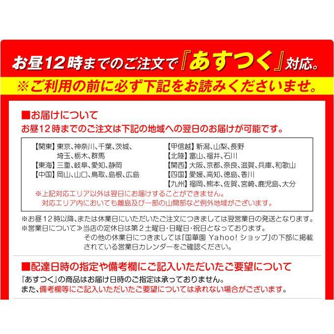 アーチ ガーデンアーチ ローズアーチ バラアーチ 鉄製アーチ・ミスリル 1個 ガーデニング 国華園 kokkaen 07