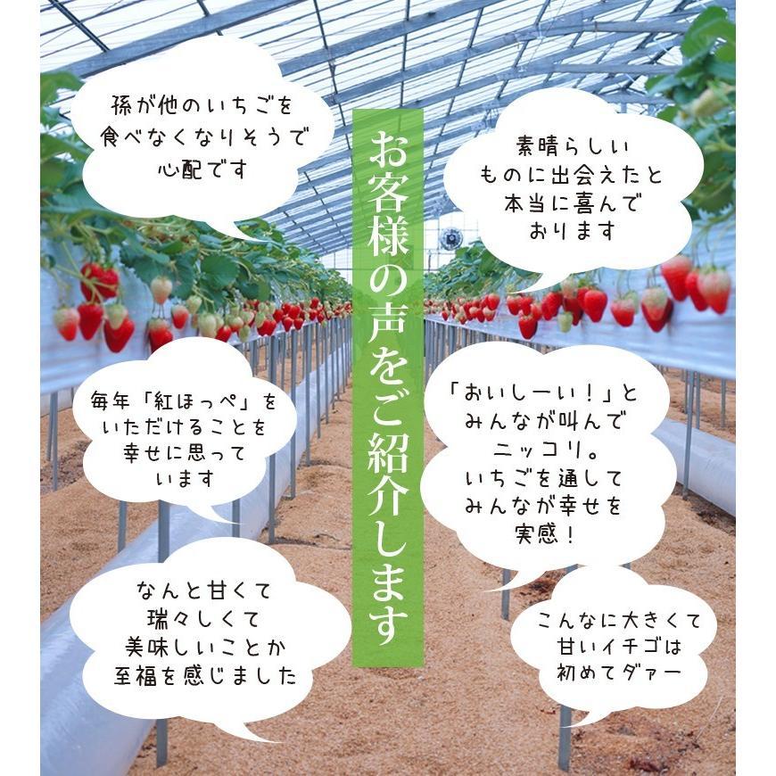 紅ほっぺ4パック・ギフト用&自家用に|komagane-ichigo|02