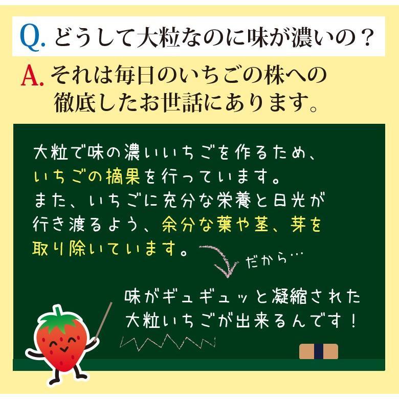 紅ほっぺ4パック・ギフト用&自家用に|komagane-ichigo|04