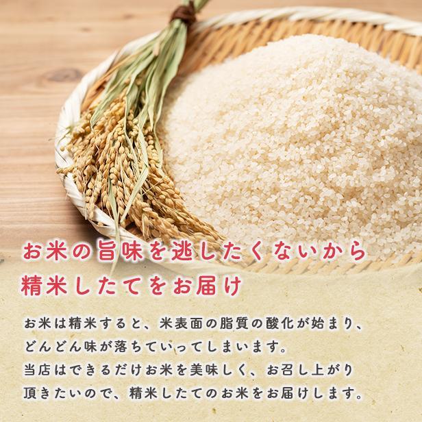 令和2年産 あきたこまち家計お助け米 農家直送便 10kg(5kg×2袋) komatiline 05
