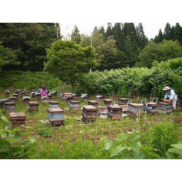 小松養蜂場 アカシア蜂蜜 180g|komatsu888|04
