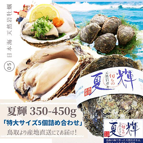 天然岩牡蠣 活 夏輝牡蠣 350g-450g前後 5個セットブランド 鳥取産 岩ガキ 送料無料 刺身用 日本 岩がき 予約 カキ
