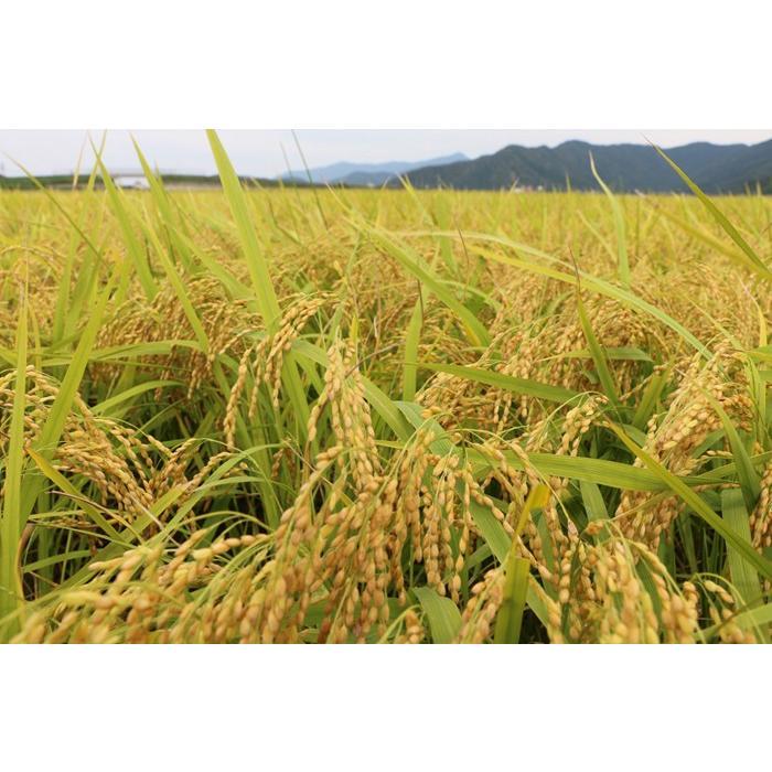 新米 いちほまれ 福井県産 令和3年産 5kg 特別栽培 komedonyakuranosuke 05