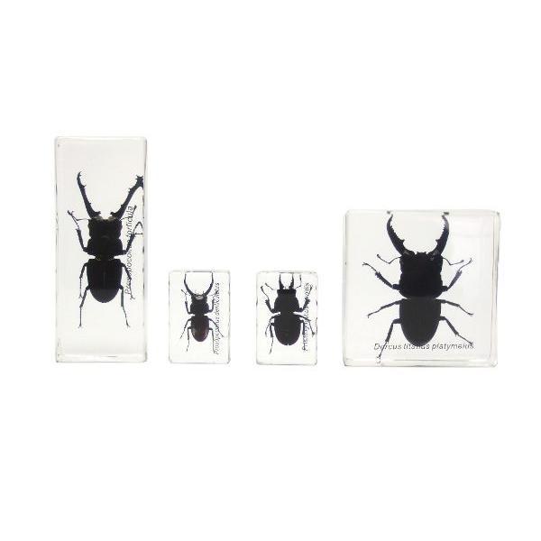 【昆虫樹脂標本】クワガタコレクション|konchu-hyouhon|02