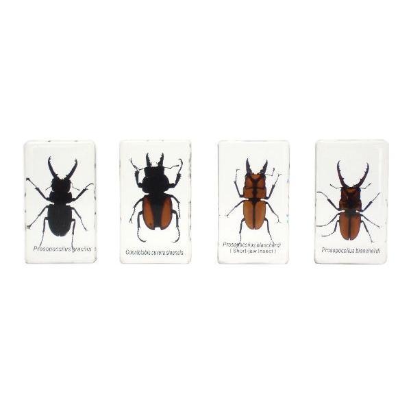 【昆虫樹脂標本】クワガタコレクション|konchu-hyouhon|03