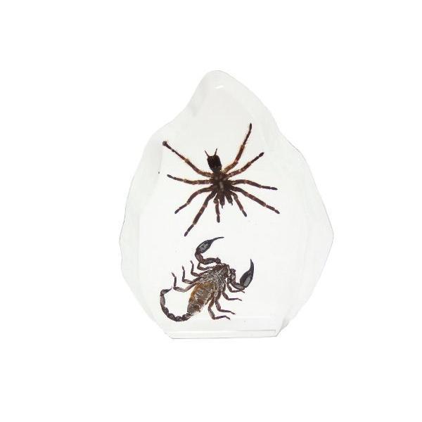 【昆虫樹脂標本】タランチュラvsサソリ|konchu-hyouhon|03