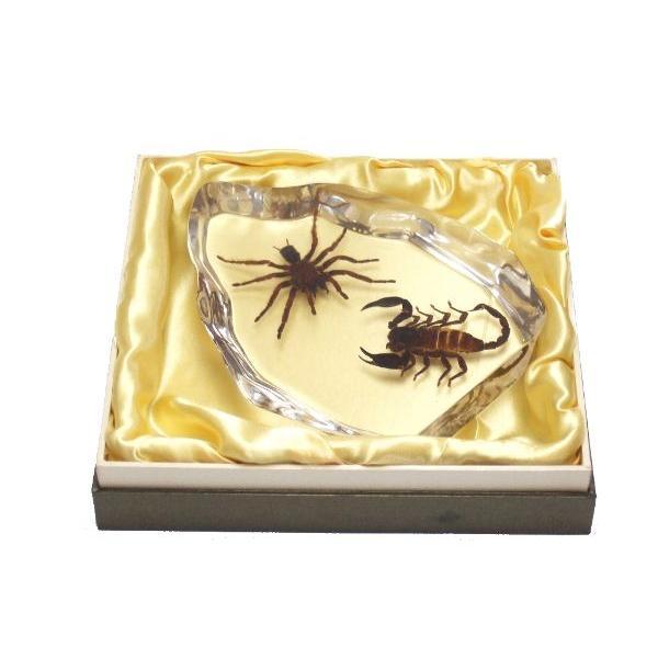 【昆虫樹脂標本】タランチュラvsサソリ|konchu-hyouhon|04