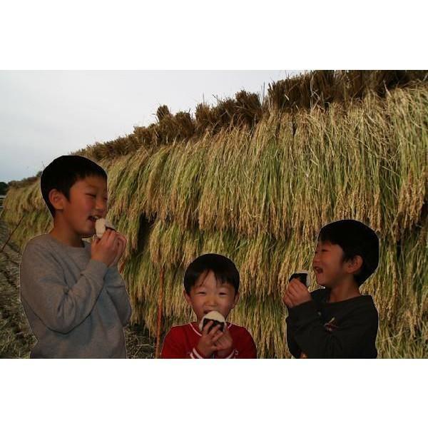 【無洗米】 無洗米5kg 新潟県産 つきあかり 5kg (5kg×1袋) お米 5キロ 無洗米 5キロ 農家直送 つきあかり 5キロ 令和2年産 美味しいお米|kosihikari|02