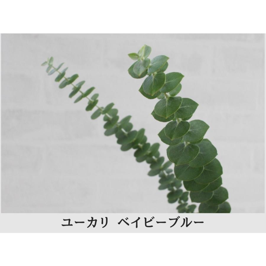 ユーカリ 5種類セット 葉枝(生花) 40〜60cm   アレンジメント・スワッグ素材 枝物 空間装飾 ナチュラル グリーンインテリア 国産 kugelfg 04
