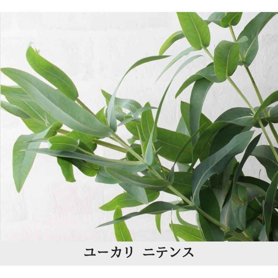 ユーカリ 5種類セット 葉枝(生花) 40〜60cm   アレンジメント・スワッグ素材 枝物 空間装飾 ナチュラル グリーンインテリア 国産 kugelfg 05