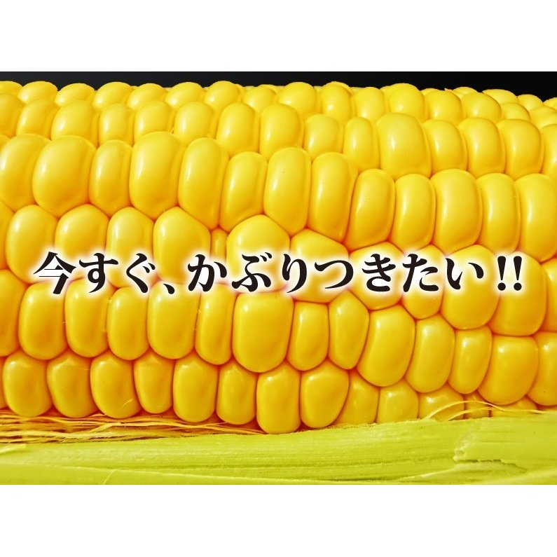 とうもろこし  ゴールドラッシュ Mサイズ  約4.5kg 宮崎 ヒルナンデスで紹介 JA西都協賛 Y蔵 kuishinboucom 02