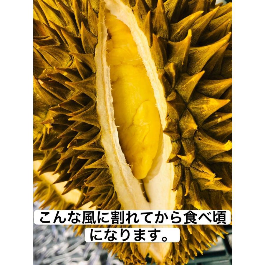 ドリアン ベトナム産 モントン種 2.5kg ~ 3kg 1玉|kukuhaha|06