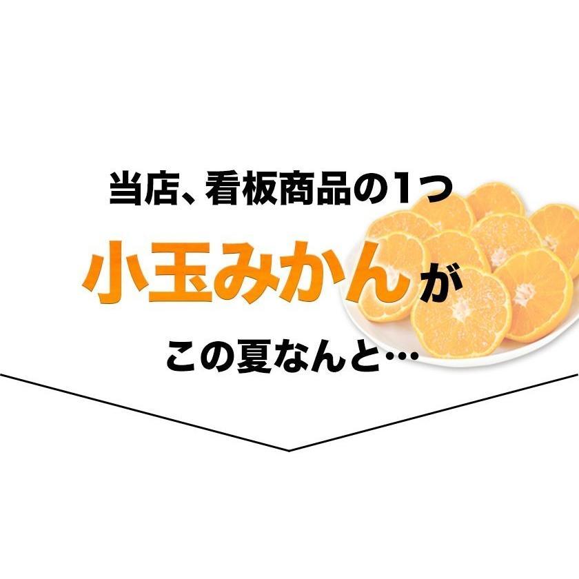熊本県産 冷凍 小玉 みかん 皮むき 1.5kg 500g×3袋 送料無料 2s~3s 2s 3sサイズ 柑橘 2セット購入で1セットおまけ  7-14営業日以内に出荷予定 土日祝日除く|kumamotofood|02