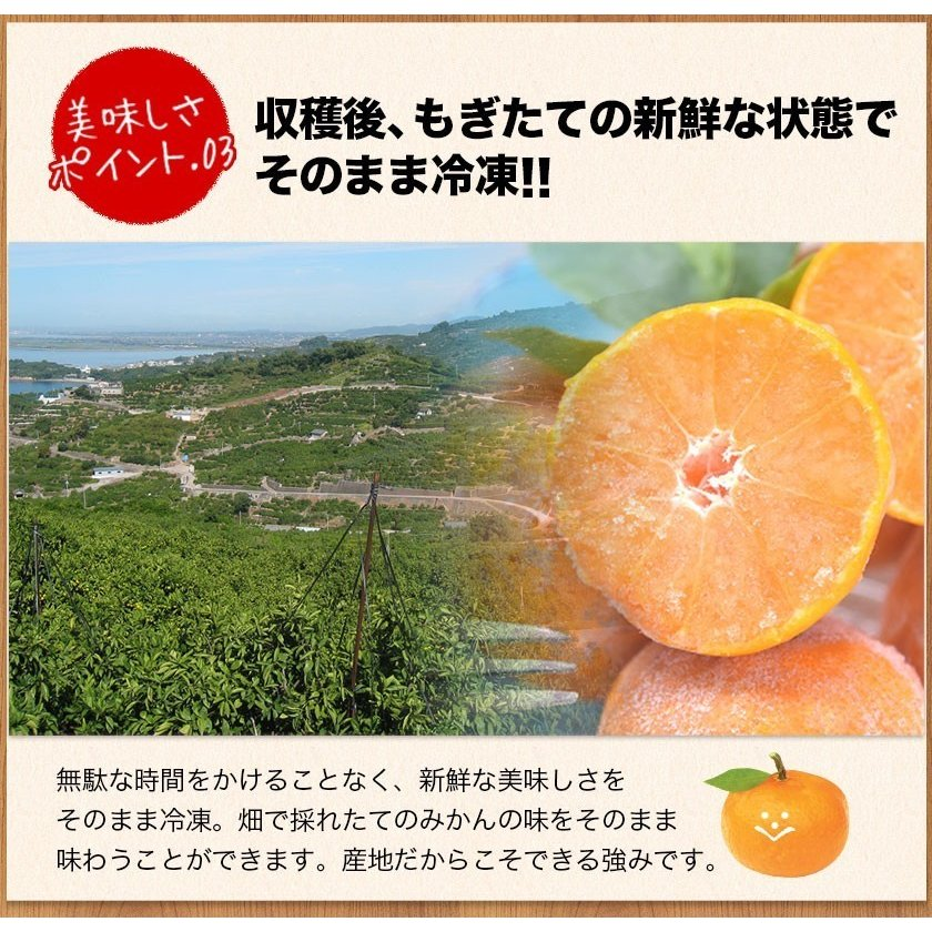 熊本県産 冷凍 小玉 みかん 皮むき 1.5kg 500g×3袋 送料無料 2s~3s 2s 3sサイズ 柑橘 2セット購入で1セットおまけ  7-14営業日以内に出荷予定 土日祝日除く|kumamotofood|13