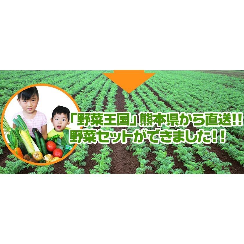 自家用 野菜セット たっぷり12品目 送料無料 熊本 九州 の安心安全 旬野菜 7-14営業日以内に出荷予定(土日祝日除く)|kumamotofood|04