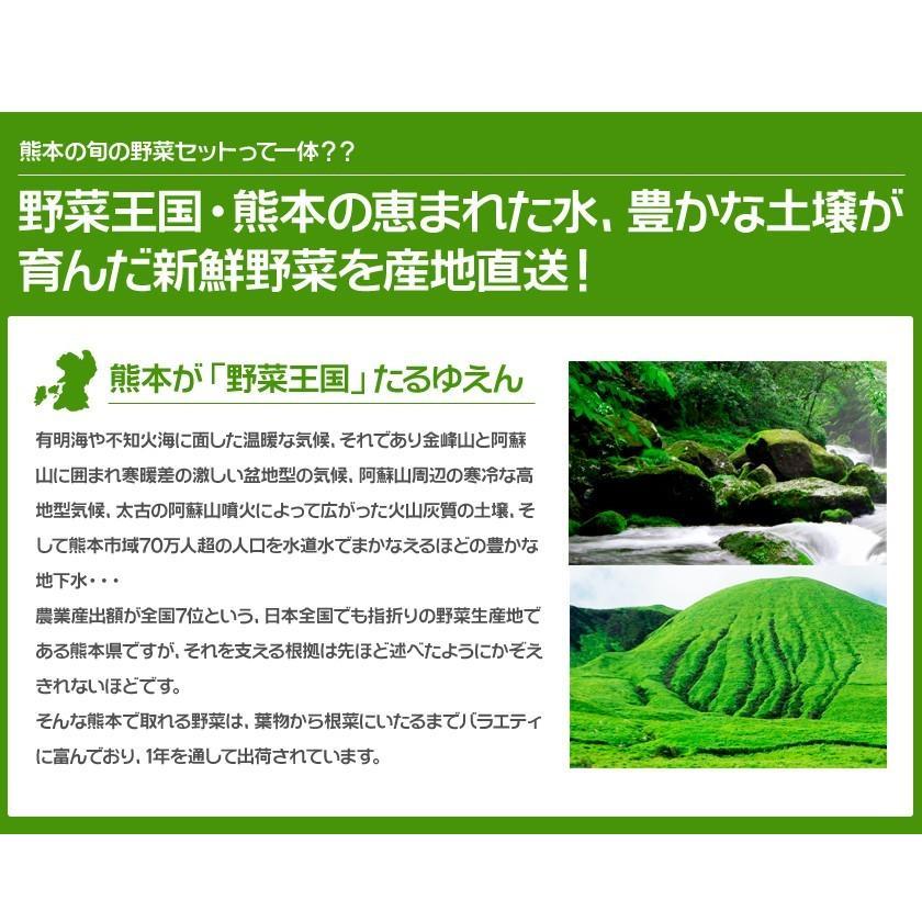自家用 野菜セット たっぷり12品目 送料無料 熊本 九州 の安心安全 旬野菜 7-14営業日以内に出荷予定(土日祝日除く)|kumamotofood|05