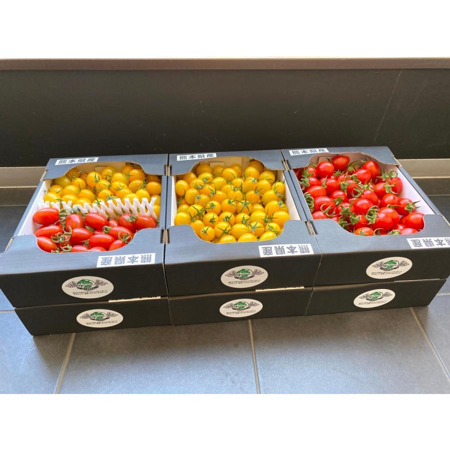 産地直送 高濃度アイコトマト 約1.5kg 高級品 物品