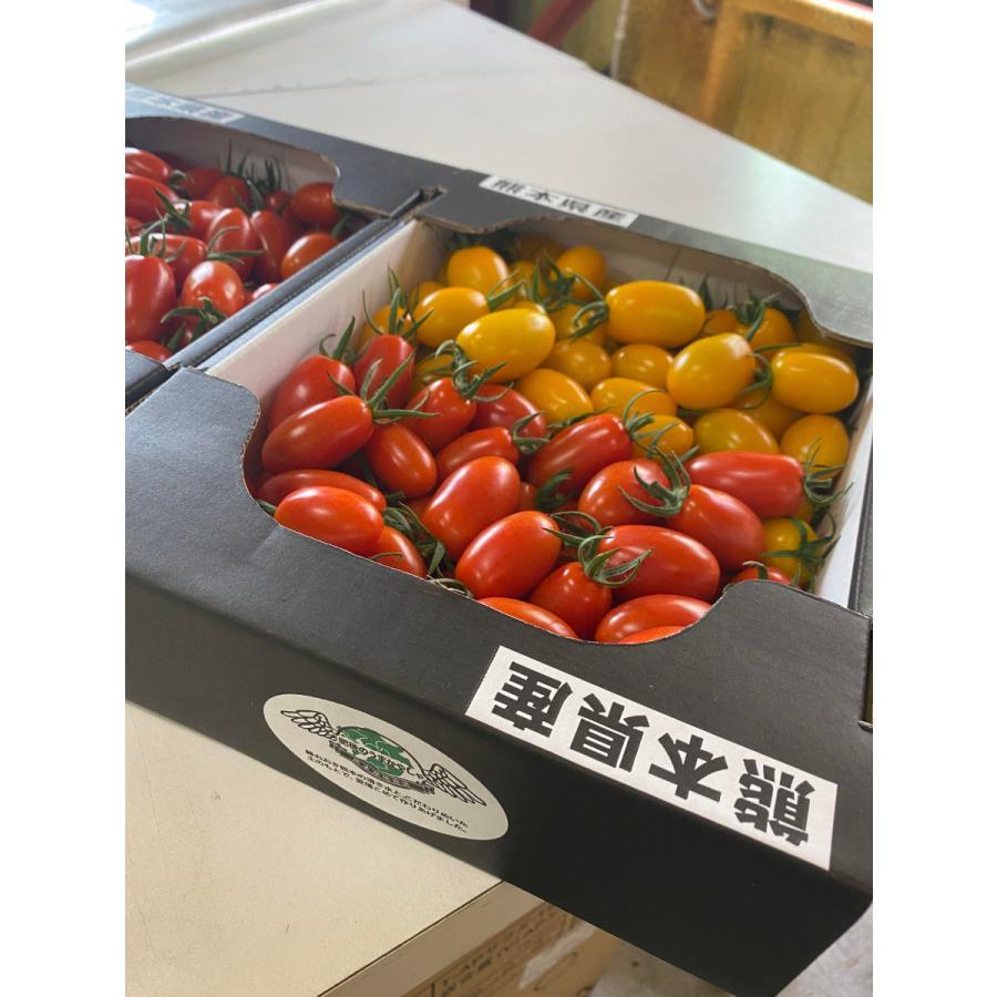 【産地直送】高濃度アイコトマト    約1.5kg kumamotokounoudo 06