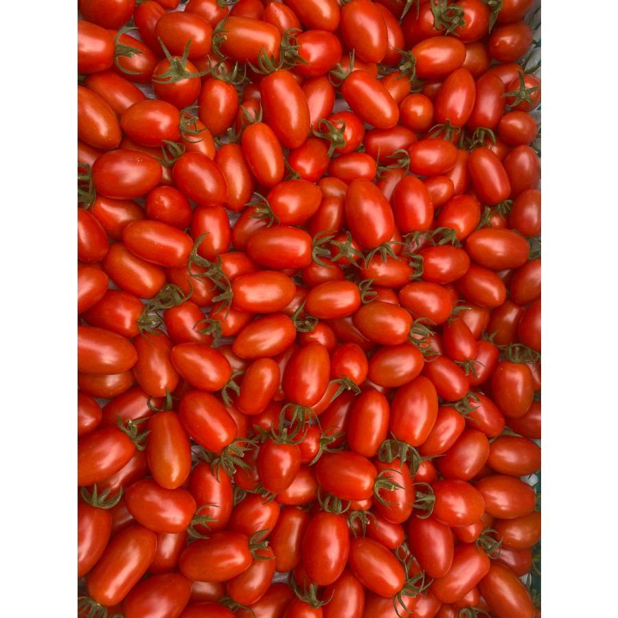 【産地直送】高濃度アイコトマト    約1.5kg kumamotokounoudo 07