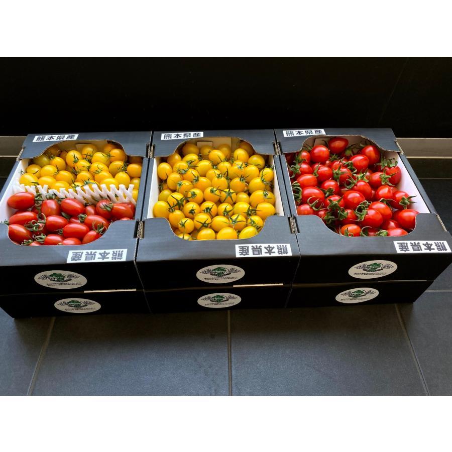 【産地直送】高濃度アイコトマト    約1.5kg kumamotokounoudo 08