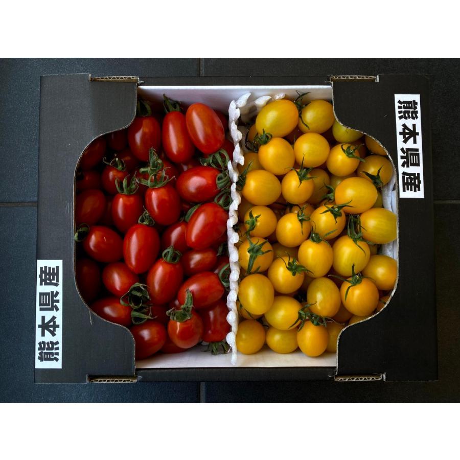 【産地直送】高濃度アイコトマト    約1.5kg kumamotokounoudo 09