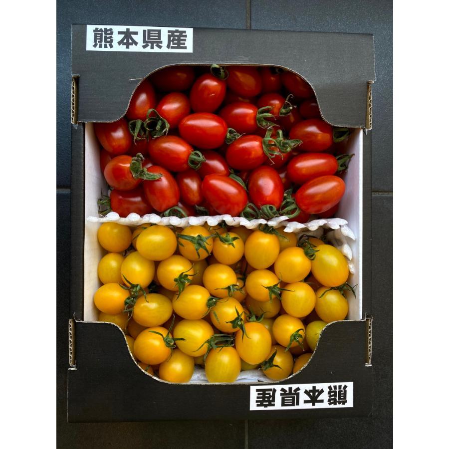 【産地直送】高濃度アイコトマト    約1.5kg kumamotokounoudo 10