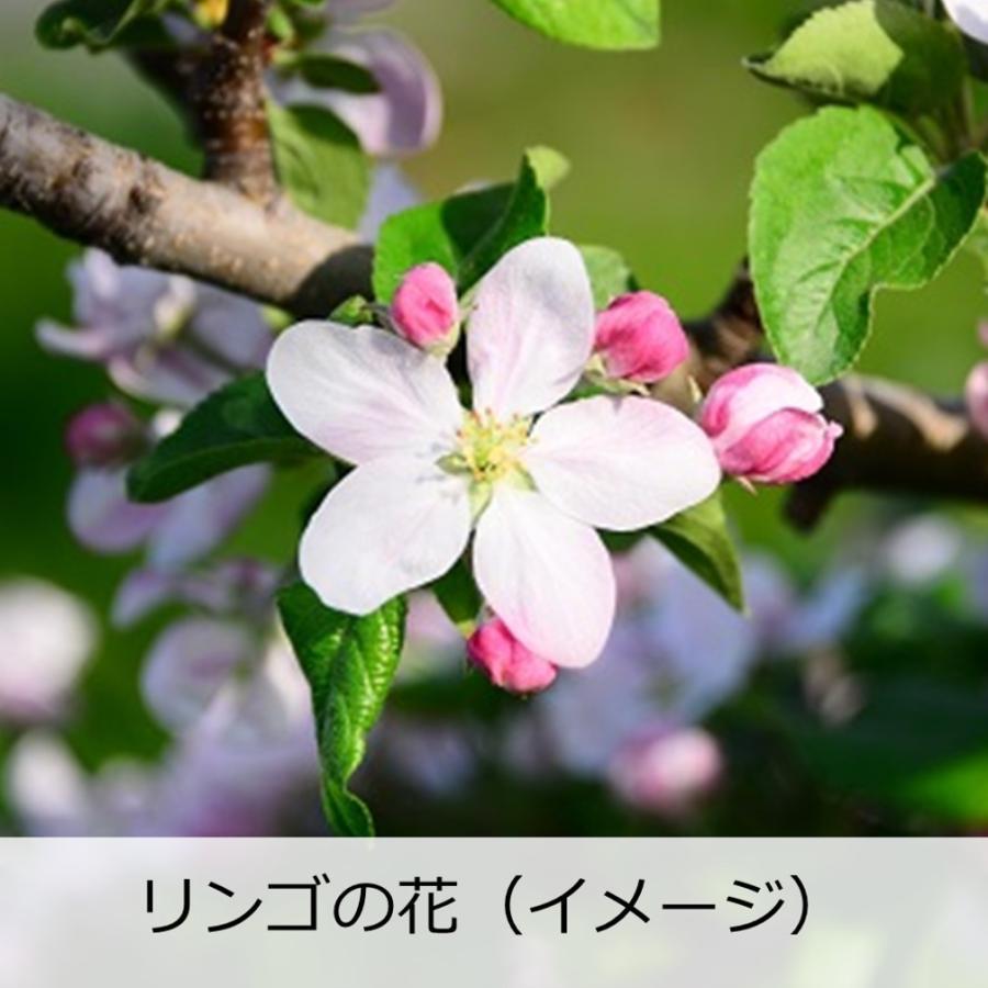 日本酒 辛口 天吹 純米大吟醸 りんご酵母 誕生日 夫婦 記念日 転職 720ml|kumanonamida|07