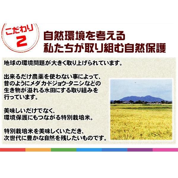 新潟ひかりっこ 新潟県産 特別栽培米 ひかりっこ米 5kg 令和2年新米 kumazou2 04