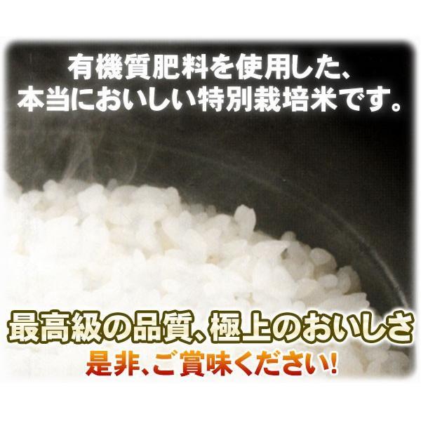 新潟ひかりっこ 新潟県産 特別栽培米 ひかりっこ米 5kg 令和2年新米 kumazou2 05