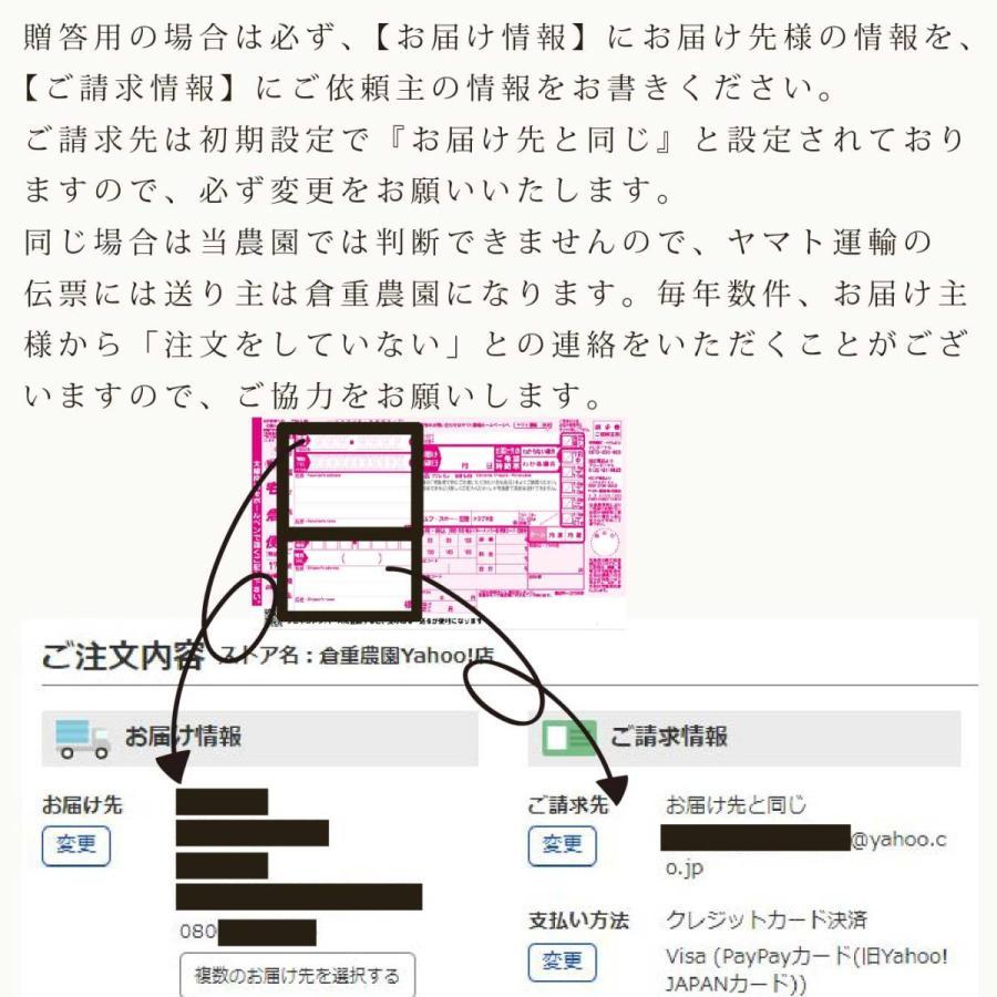 【品番B】大玉×3玉入り くるめで育った完熟マンゴー kurashige-nouen 04