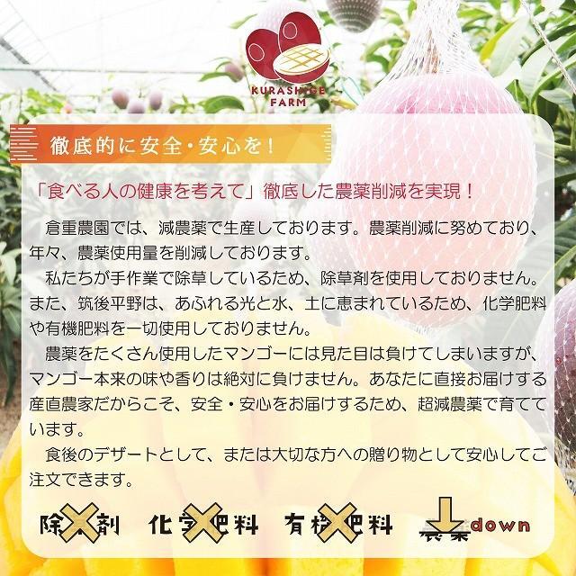 【品番D-3】'特大玉×3玉入り くるめで育った完熟マンゴー kurashige-nouen 05