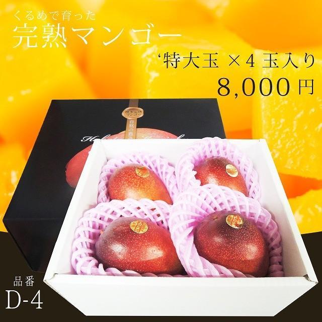 【品番D-4】'特大玉×4玉入り くるめで育った完熟マンゴー|kurashige-nouen