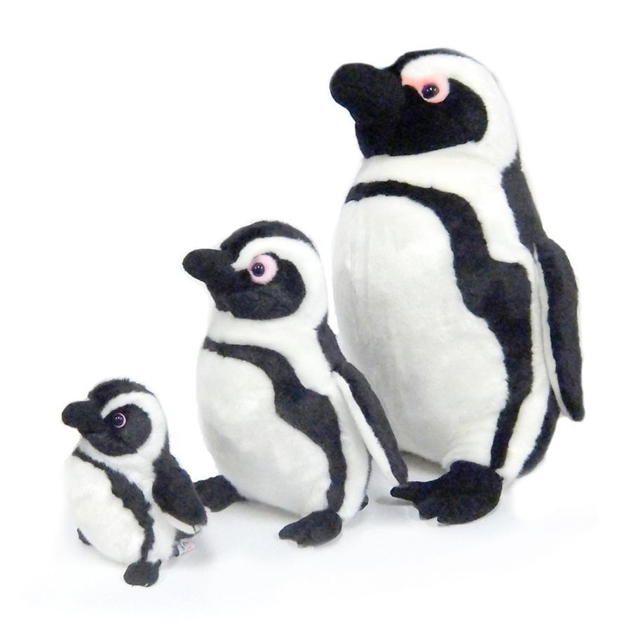 ケープペンギンM|kyoto-aquarium|04